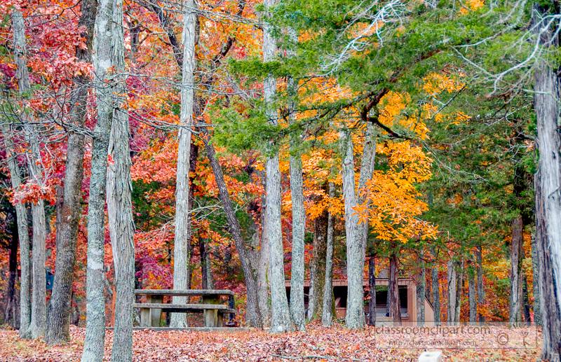 fall_leaves_0827.jpg