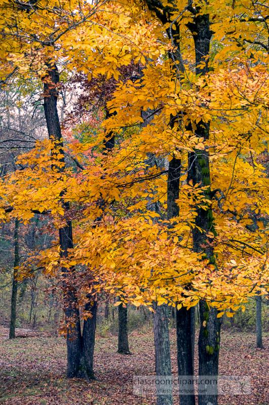 fall_leaves_0829.jpg