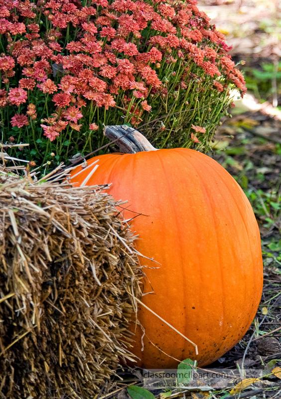 pumpkin-with-chryssanthemum-flower-10_09_35.jpg