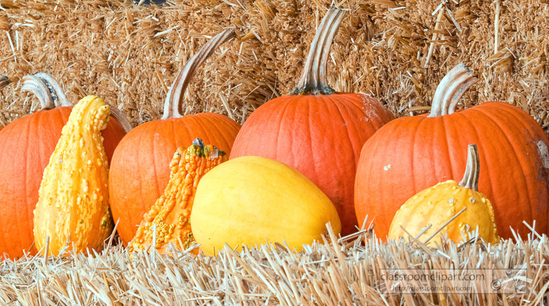 pumpkins-lined-up-on-hay_10_09_29.jpg