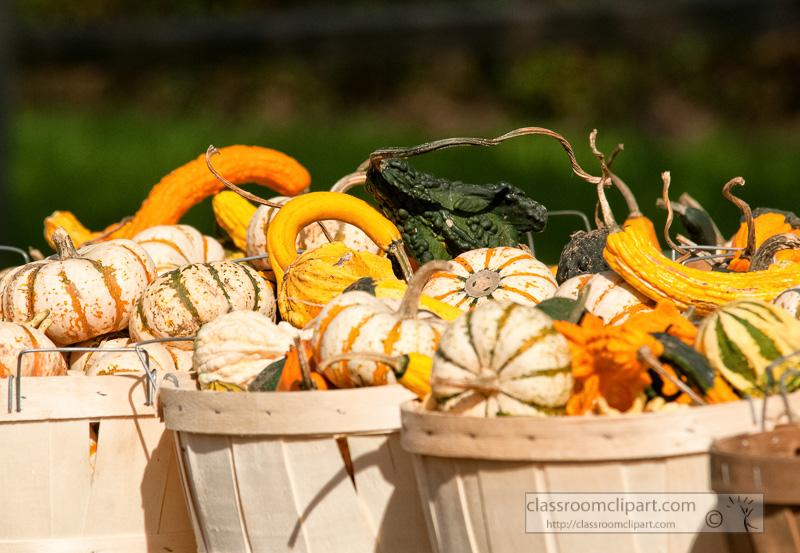 variety-fall-gourds-in-basket_10_09_40-2.jpg