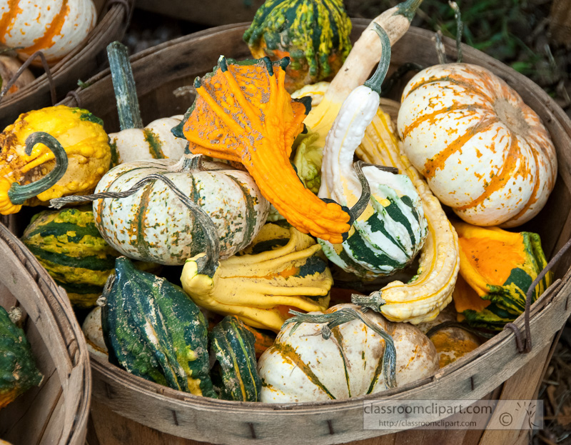 variety-fall-gourds-in-basket_10_09_40-3.jpg