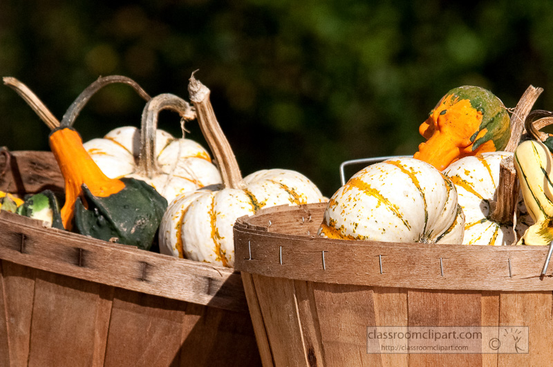 variety-fall-gourds-in-basket_10_09_40.jpg