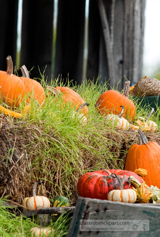 variety-pumpkins-gourds-in-wagon_10_09_25.jpg
