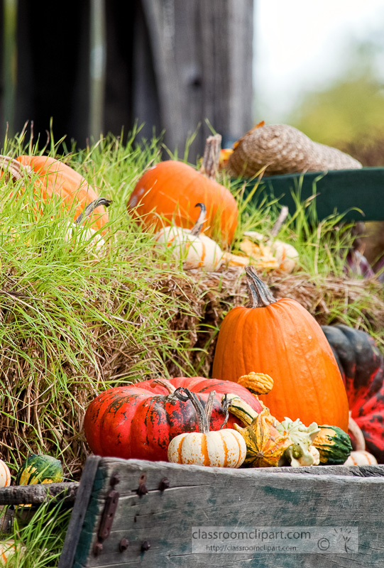variety-pumpkins-gourds-in-wagon_10_09_26.jpg