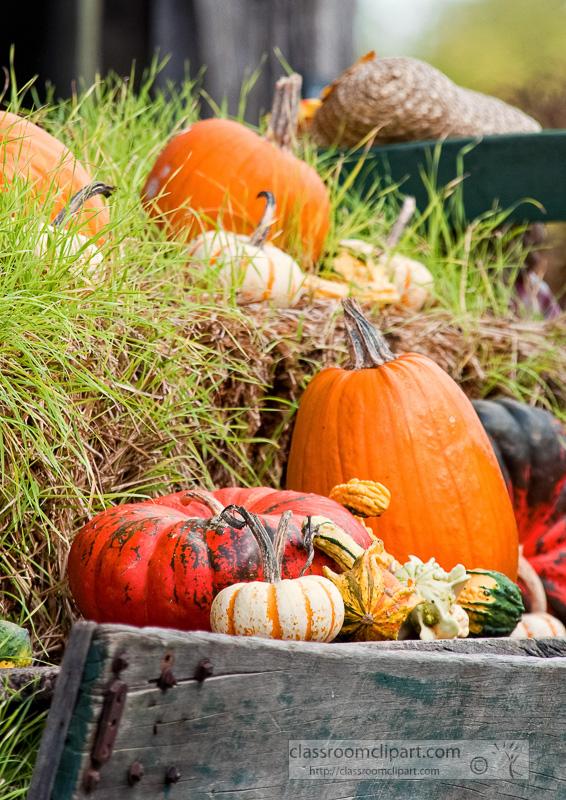 variety-pumpkins-gourds-in-wagon_10_09_27.jpg