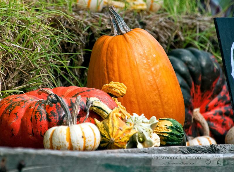 variety-pumpkins-gourds-in-wagon_10_09_28.jpg