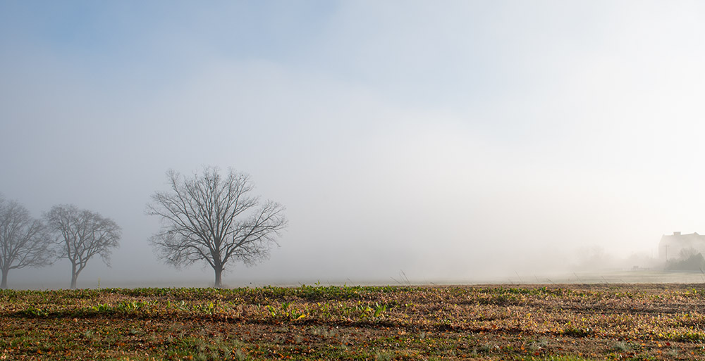 blue sky with fog clearing up in field with tree.jpg