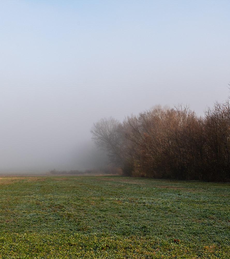 clearing fog hides trees in field.jpg