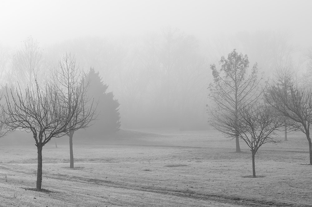 fog in the early morning at park black white photo.jpg