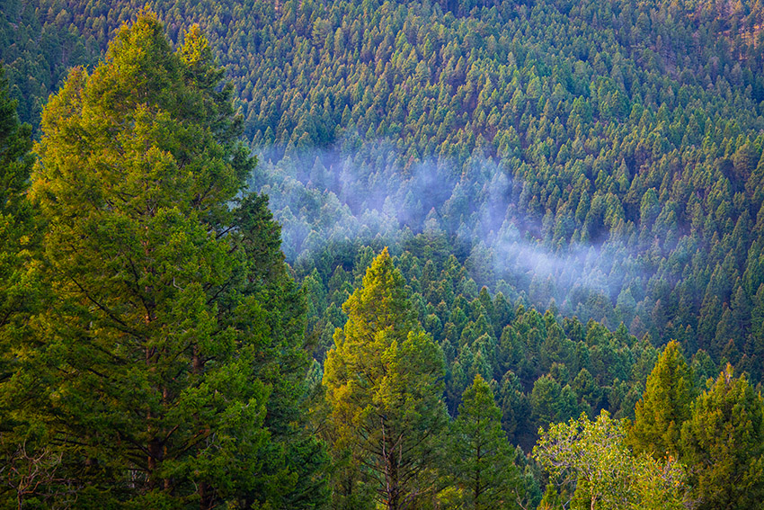 orning-fog-dissipates-in-the-montana-mountains.jpg