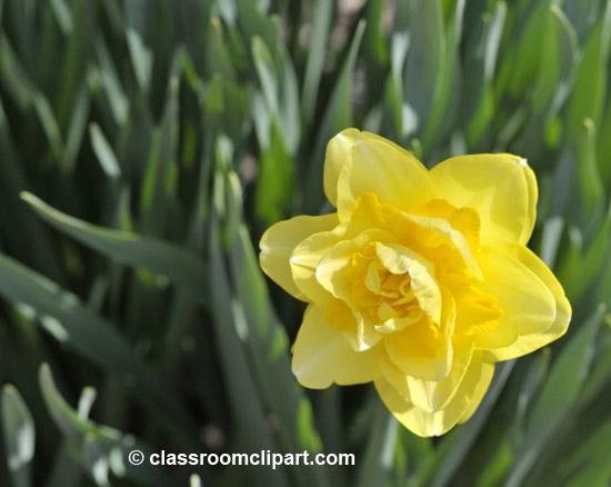 spring_4_10_12.jpg