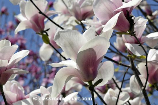 spring_4_10_16.jpg