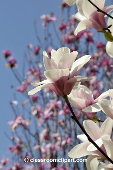 spring_4_10_18.jpg