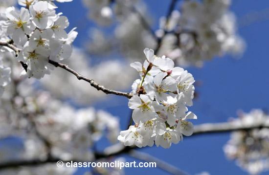 spring_4_10_24.jpg