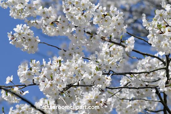 spring_4_10_25.jpg