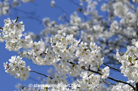 spring_4_10_26.jpg