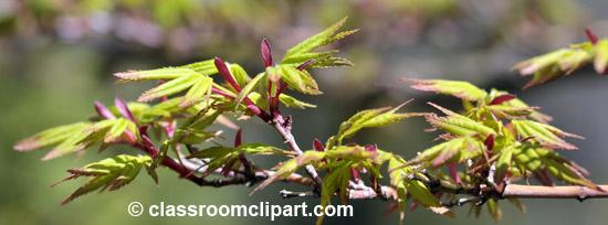 spring_4_10_28.jpg