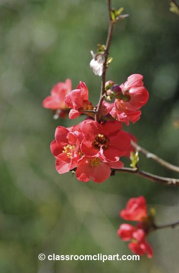 spring_4_10_29.jpg