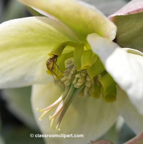 spring_4_10_34.jpg