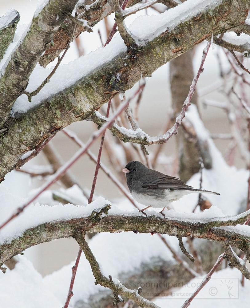bird-sitting-on-snow-covered-branch.jpg