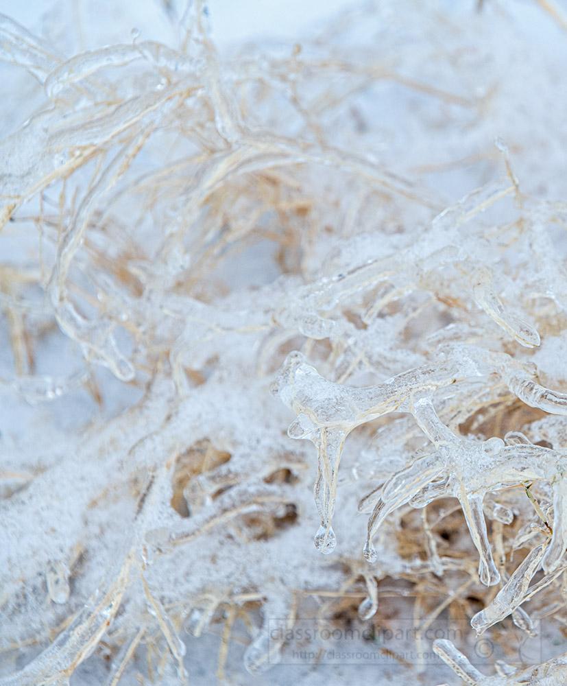 closetup-of-snow-ice-covered-plant.jpg