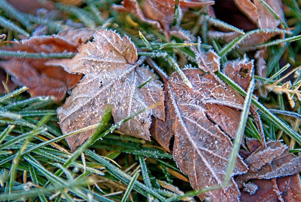 folliage on grass with ice winter.jpg