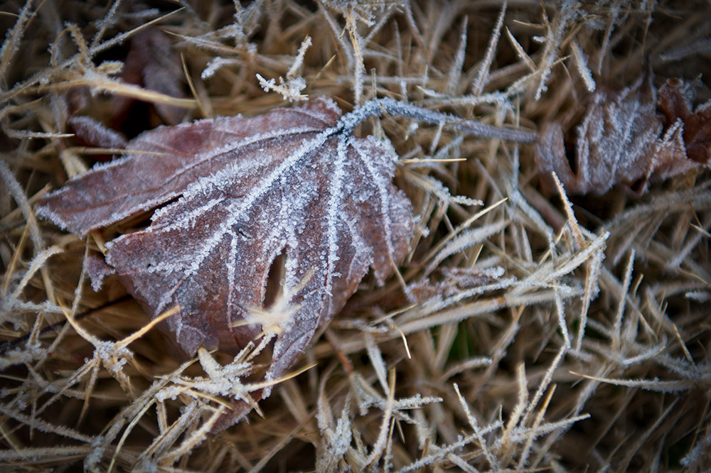 ice on leaf dropped on grass in winter photo.jpg