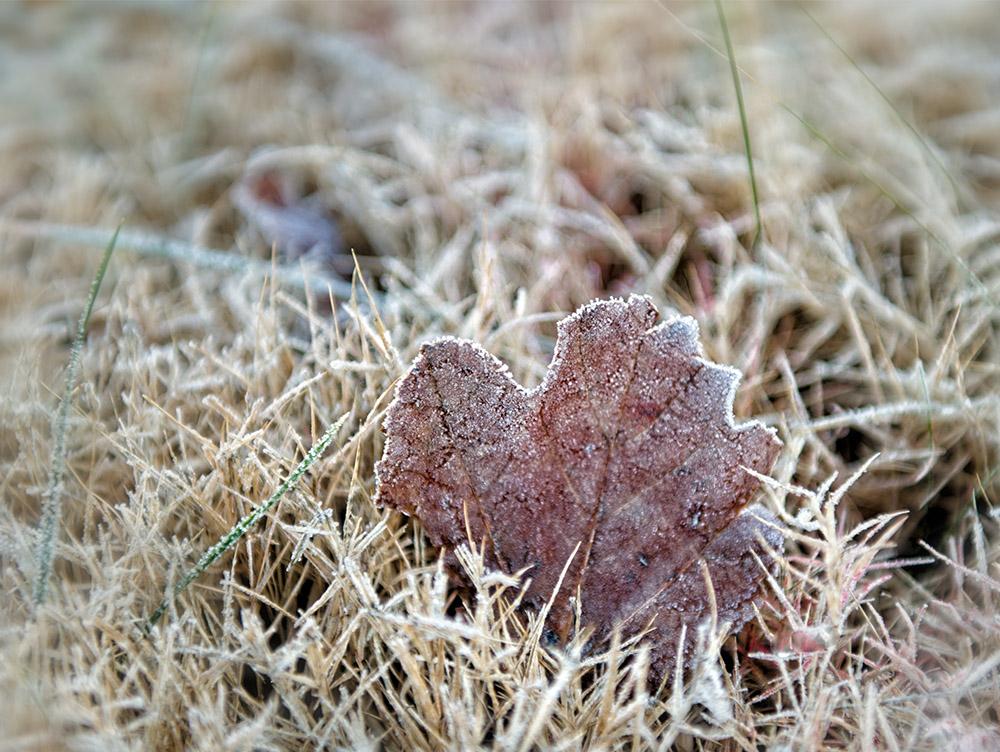 single tree leaf with winter ice.jpg