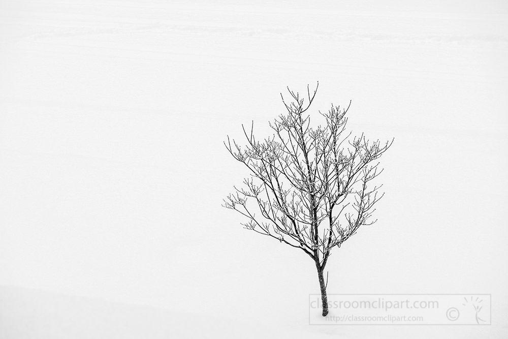 single-lone-tree-surrounded-by-snow.jpg