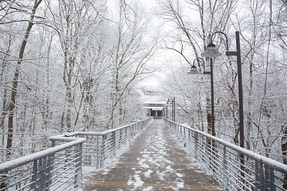 snow-covered-trees-and-bridge.jpg