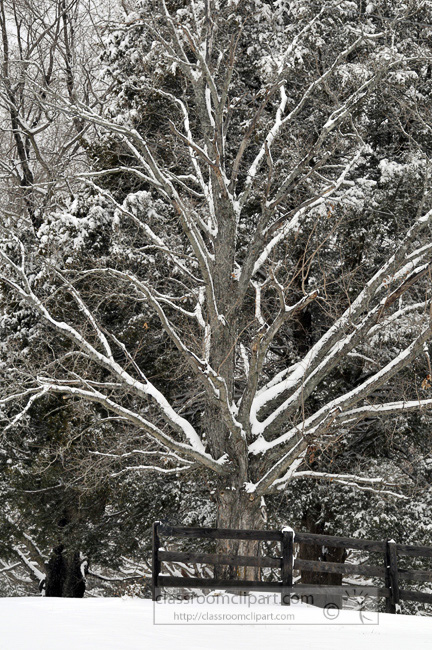 snow_covered_trees_0263.jpg