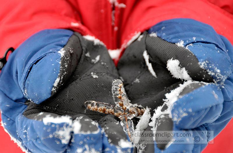 winter_2110_25.jpg