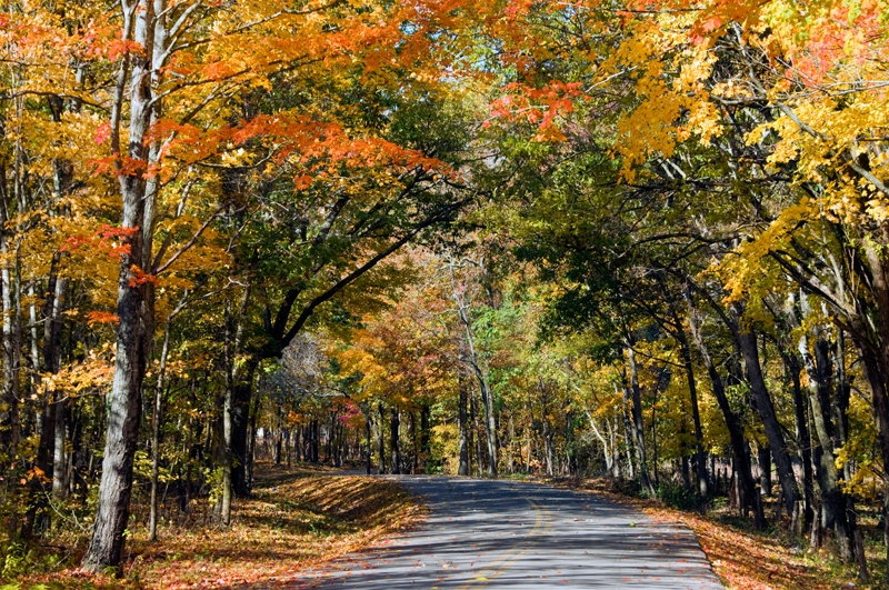fall_leaves_0812.jpg